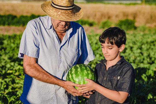 Senior male farmer and grandson carrying ripe striped watermelon together while standing in green agricultural field in summer day