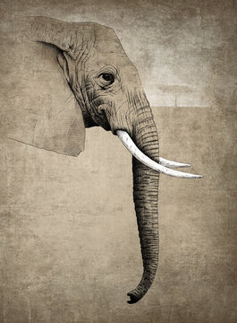Illustration of elephant with white tusks