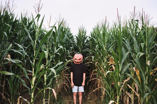 Child wearing jack o lantern standing amidst corn field during Halloween celebration