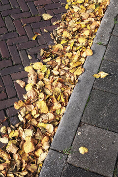 Gutter filled with fallen leaves from the limetrees