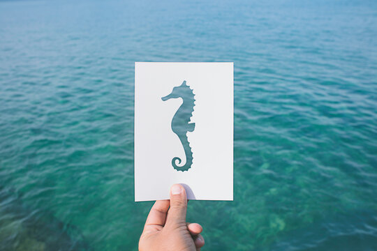 Sea horse and sea view