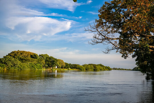 View to Brazos de Mompos (river) in warm afternoon light, tree in foreground and green riverbank, Santa Cruz de Mompox