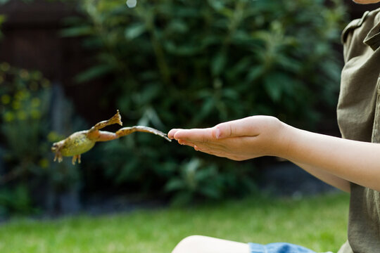 Little boy holding a garden frog in summer at home