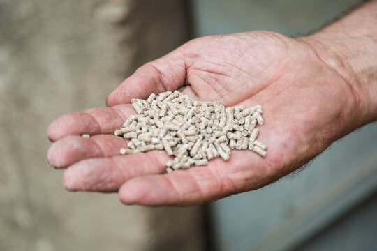 Farmer's hand with pellet feed