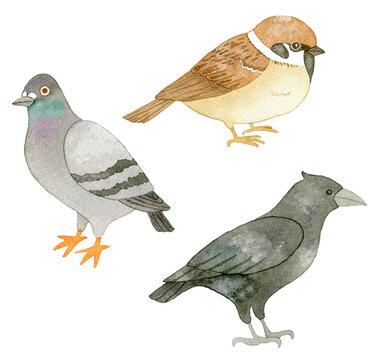 イラスト素材:鳥のセット