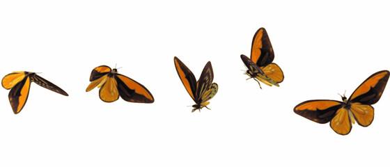 set of monarch butterflies