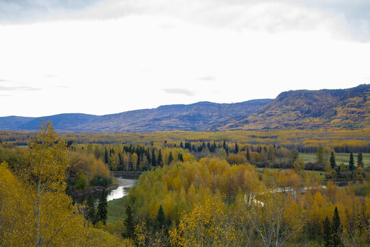 Autumn in Pine River Pine Pass BC Canada