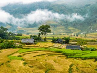 terraced rice field at Sa Pa, Vietnam
