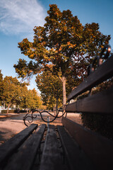 Obraz Bench in the autumn park - fototapety do salonu
