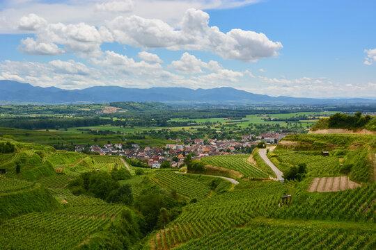 Ihringen im Kaiserstuhl - Weinbau / Baden-Württemberg / Deutschland