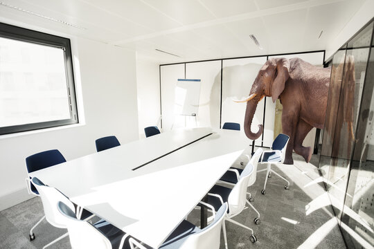 Huge big elephant entering the office meeting room - business negotiation concept