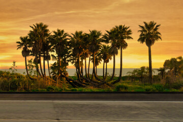palm trees at pacific coast at sunset