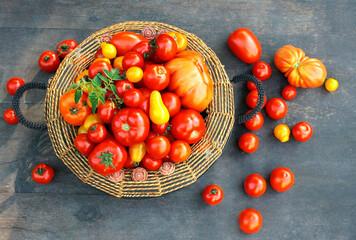 Obraz Kolorowe pomidory w koszyku - różne odmiany - fototapety do salonu