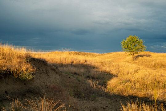 Golden grassland in light of setting sun through the clouds after storm. Deliblatska pescara, Serbia