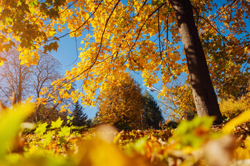 Wall Mural - The bottom view of trees in warm light. Location place Ukraine, Europe.