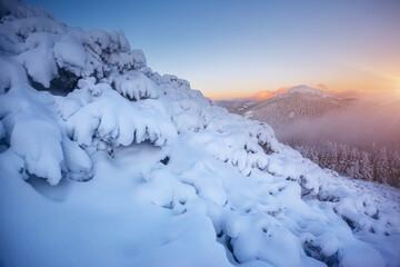 Wall Mural - Splendid winter landscape in the morning. Frosty day, exotic wintry scene.