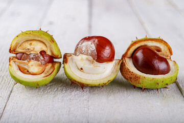 Ripe chestnuts in their shell on a wooden table. The fruits of a large deciduous tree.