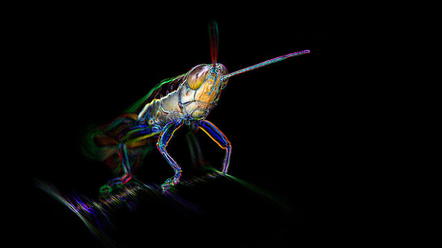 multicolored grasshopper on a leaf, macro photography of the tropical wildlife of Thailand. digital art neon light effect, black background