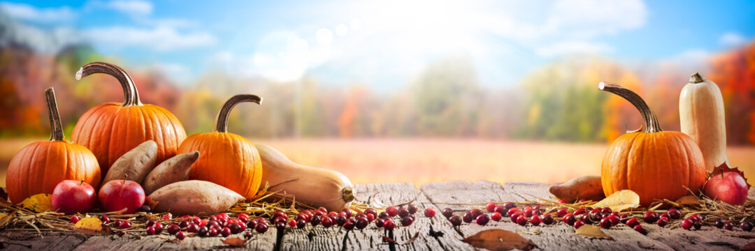 Thanksgiving And Harvest - Pie Pumpkins, Sweet Potatoes, Squash And Cranberries On Table With Harvest Field Background
