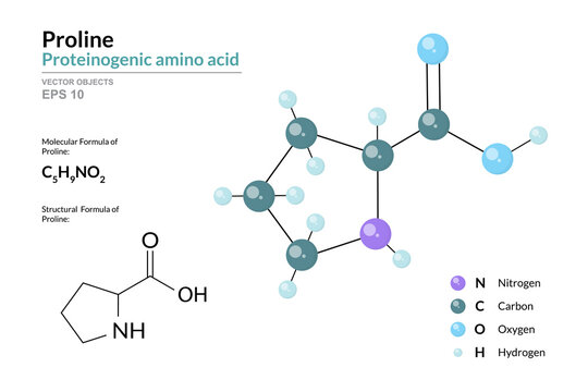 Proline. Pro C5H9NO2. Proteinogenic Amino Acid. Structural Chemical Formula and Molecule 3d Model. Atoms with Color Coding. Vector Illustration