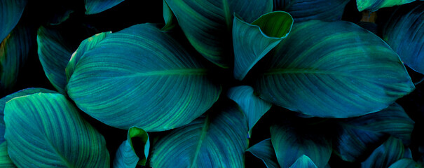 Wall Mural - closeup nature view of tropical green leaf background. Flat lay, fresh wallpaper banner concept