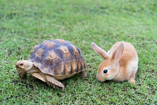 the rabbit and turtle tales.