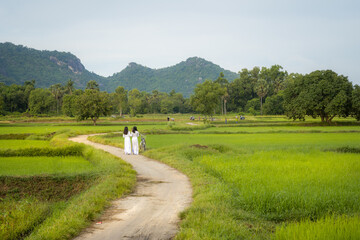 Rural landscape in Vietnam countryside with Vietnamese women wearing traditional dress Ao Dai walking on rural road