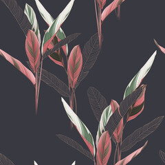 Foliage seamless pattern, heliconia Ctenanthe oppenheimiana plant on dark grey
