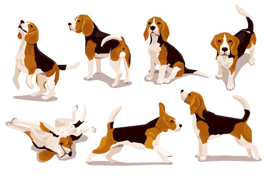 Cute cool beagle puppy set. Collection of flat dog in various poses and actions. Vector illustration of domestic pet behavior