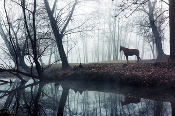 Foggy landscape of a horse inside a swampy forest in a dark and mysterious environment. Morning scenery in a wetlands or in a swamp.