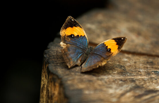 Butterfly is pictured at the Butterfly World in Stockton-on-Tees