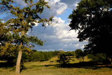 Wall Mural - Rural Texas landscape with trees and clouds in sky over farm.