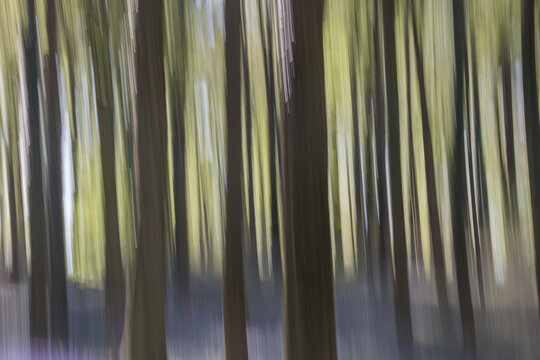 abstract motion blur  of colorful trees,zoom technique