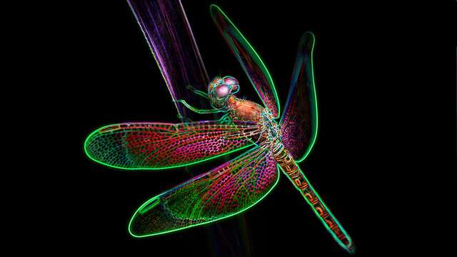 multicolored dragonfly on a leaf, macro photo of this elegant and fragile predator with wide wings and giant colorful eyes, digital neon light effect, black background, Thailand