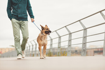 Close-up of man walking with his German shepherd on a leash along the bridge in the city