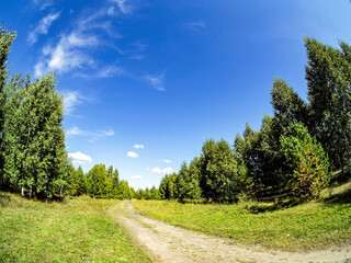 road along the edge of the forest on a Sunny summer day, blue sky with light clouds, green field, Russia