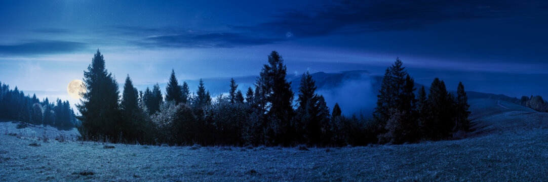 foggy autumn landscape panorama at night. spruce trees on the meadow in full moon light. mountain behind the morning mist. cloud inversion natural phenomenon observed from the side