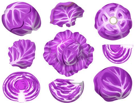 色々な紫キャベツ