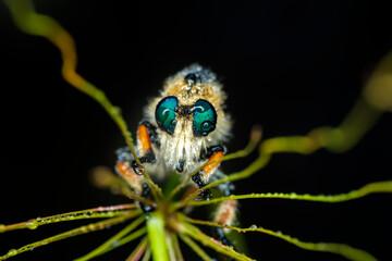 Fond de hotte en verre imprimé Papillon Macro shot of a robber fly in the garden