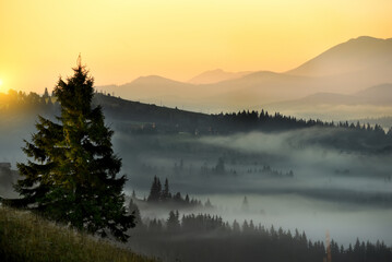 Morning mountain landscape. View of green mountains and valleys in the fog.