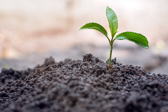 Trees growing from fertile soil Ideas to nourish trees, save energy, protect the environment, create soil, create and save the earth, world environment day.