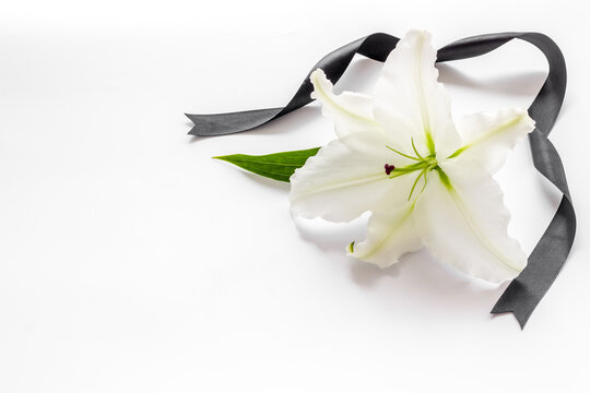 Funeral symbols. White lily with black ribbon, top view