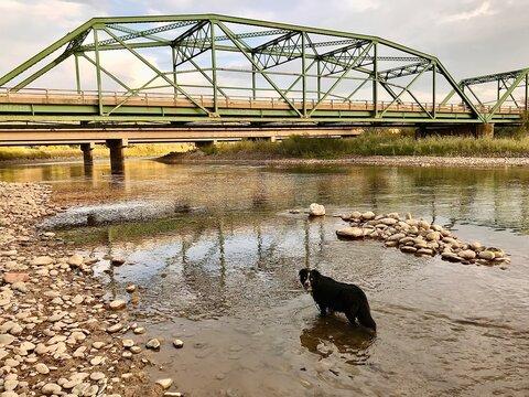 Dog in river by bridge
