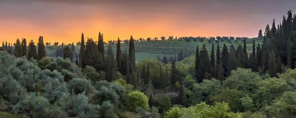 Cypress landscape tuscany