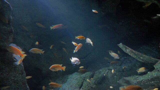 Underwater - exotic fishes in an aquarium