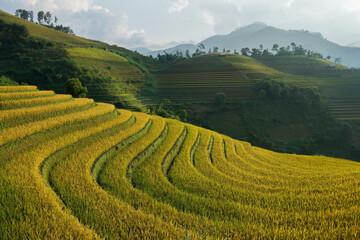 Photo sur Aluminium Les champs de riz Beautiful morning terraced rice fields in Sapa, Viatnam