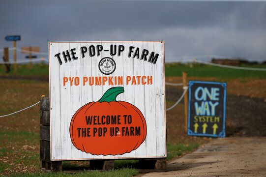 Pumpkins are seen at The Pop up Farm Flamstead, ahead of opening