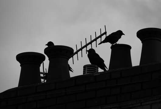 Black and white of crows in silhouette on roof with chimeny stacks and aerial
