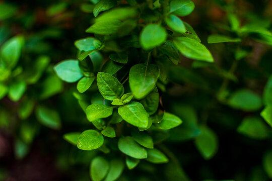 Natureza verde, flores e plantas do jardim