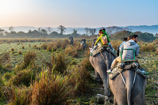 Early morning elephant ride on elephants through the elephant grass, Kaziranga National Park, Assam, India